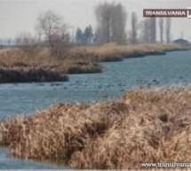 Iubește păsările – Respectă biodiversitatea județului tău