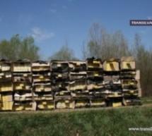Ţigări de contrabandă, în valoare de 130.000 lei, confiscate