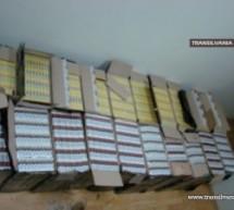 Aproape 7.500 pachete de țigări au fost descoperite la Moișeni