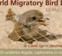 Expoziție cu ocazia Zilei Mondiale a Păsărilor Migratoare