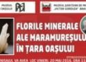 Florile minerale ale Maramureşului în Ţara Oaşului