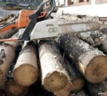 S-au ales cu dosare penale după ce au furat lemne