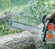 A tăiat ilegal arbori