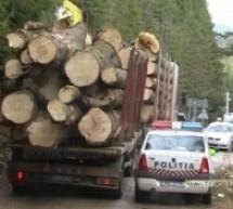 Tânăr din Vama, cercetat de poliţişti pentru tăiere ilegală şi furt de arbori