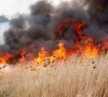 Peste 1.000 de butuci de viță de vie au ars într-un incendiu