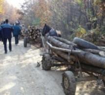 Amendat cu 4.000 lei pentru transport ilegal de lemne