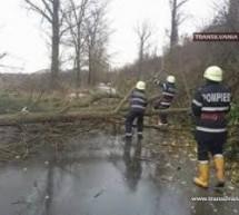 Copac doborât de furtună la Doba