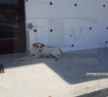 Campanie de capturare a câinilor comunitari din Comuna Păulești