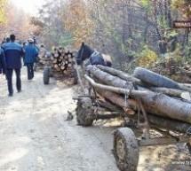Furt de material lemnos la Negrești-Oaș și Ardud