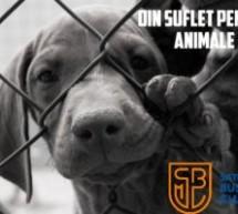 """Satu Mare Business club lanseaza campania """"Din suflet pentru animale"""""""