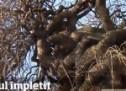 Un copac din Satu Mare atrage toate privirile. Arborul are ramurile împletite!
