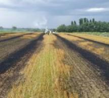 Incendiu de vegetație uscată în Halmeu