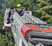 Pompierii sătmăreni au salvat un papagal