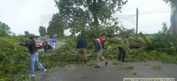 DN 19, blocat între Botiz și Ciuperceni de un copac căzut pe carosabil