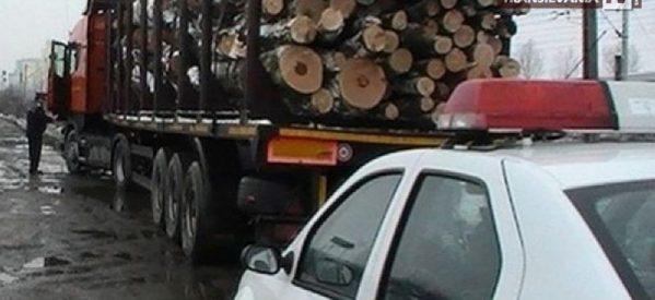 Prins în timp ce transporta ilegal material lemnos