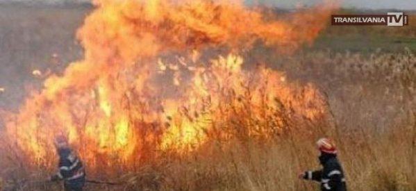 Pompierii sătmăreni au lichidat un incediu de vegetație uscată