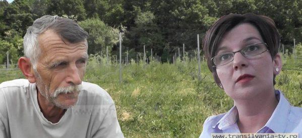 ÎN NUMELE LEGII! Prima plantaţie BIO de Goji atestată în România, trebuie transformată în păşune! (VIDEO-Galerie FOTO)